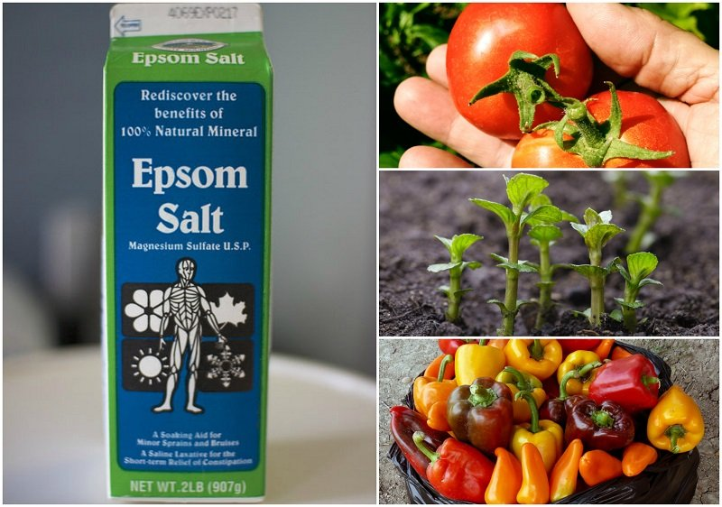10 Incredible Uses for Epsom Salt in the Garden