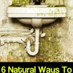 6 Natural Ways to Rid Your Home of Mold & Mildew 1