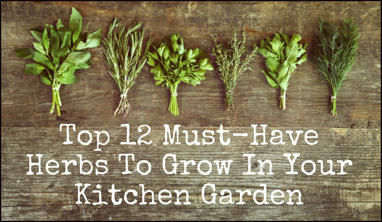 Herb Garden Kitchen 12 Healing Herbs You Need To Grow In Your Medicinal Garden