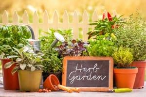 10 Genius Tips For Successful Organic Gardening