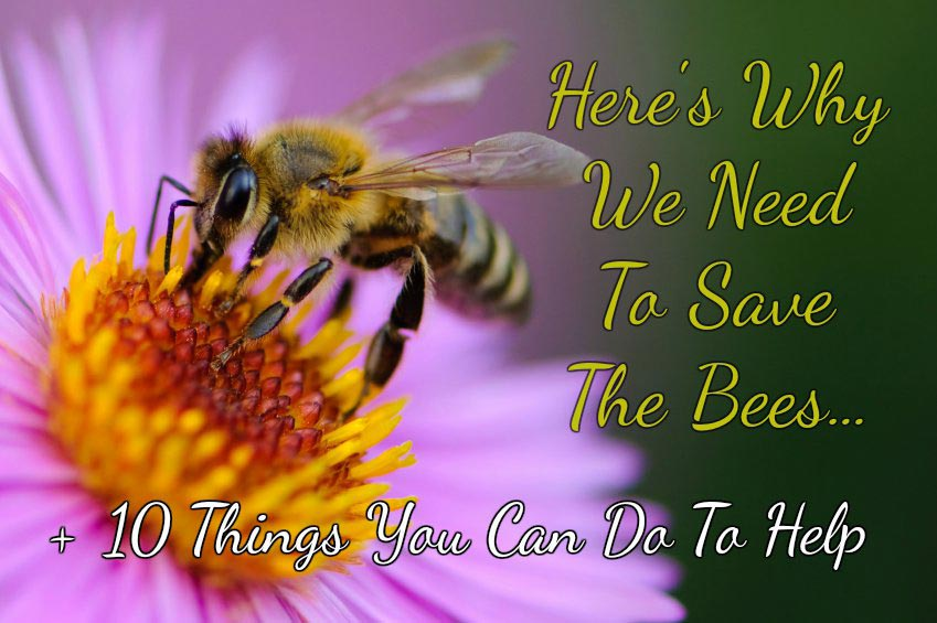 Here's Why We Need To Save The Bees + 10 Things You Can Do To Help
