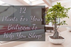 12 Plants For Your Bedroom to Help You Sleep