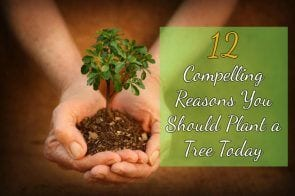 12 Compelling Reasons You Should Plant a Tree Today