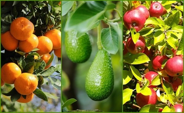 9 secrets to get more fruit from your garden for Fruit and vegetable garden