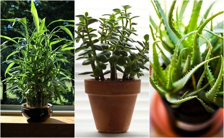 22 Practically Immortal Houseplants That Even You Can 39 T Kill