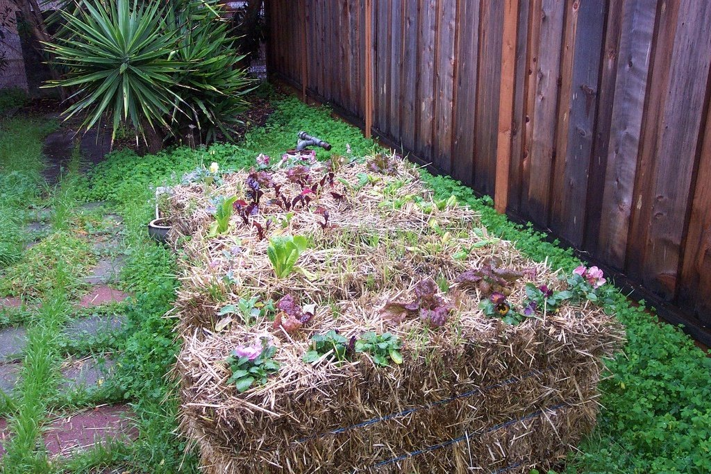 10 Reasons To Try Straw Bale Gardening + How To Get Started