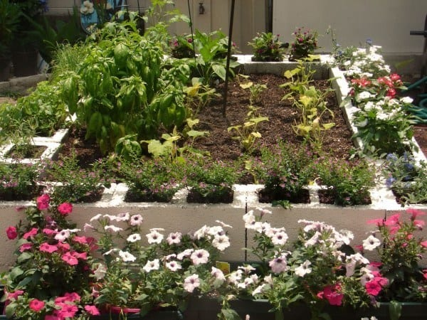 cinder block raised bed ideas