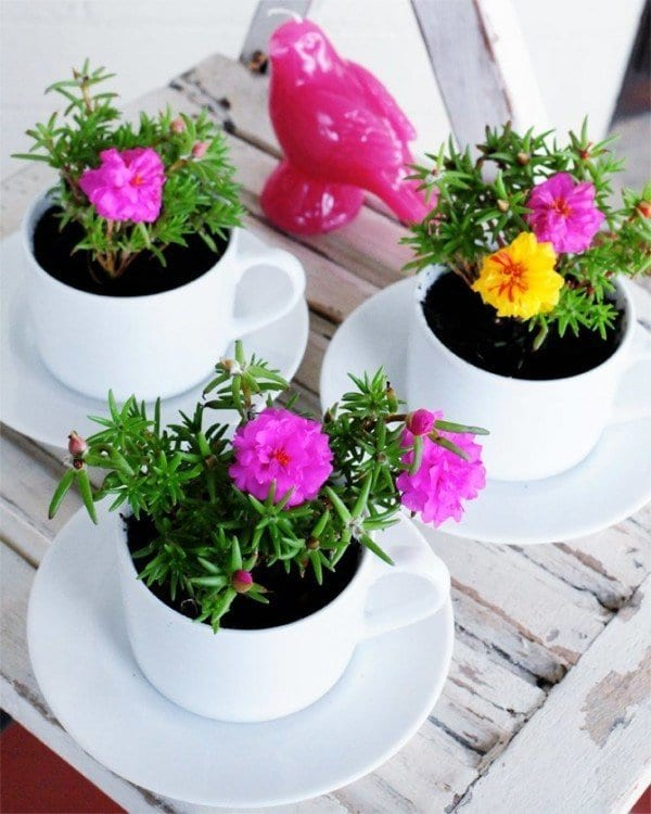 tea cup containers