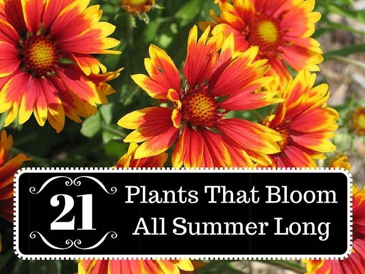 21 plants that bloom all summer long mightylinksfo Choice Image