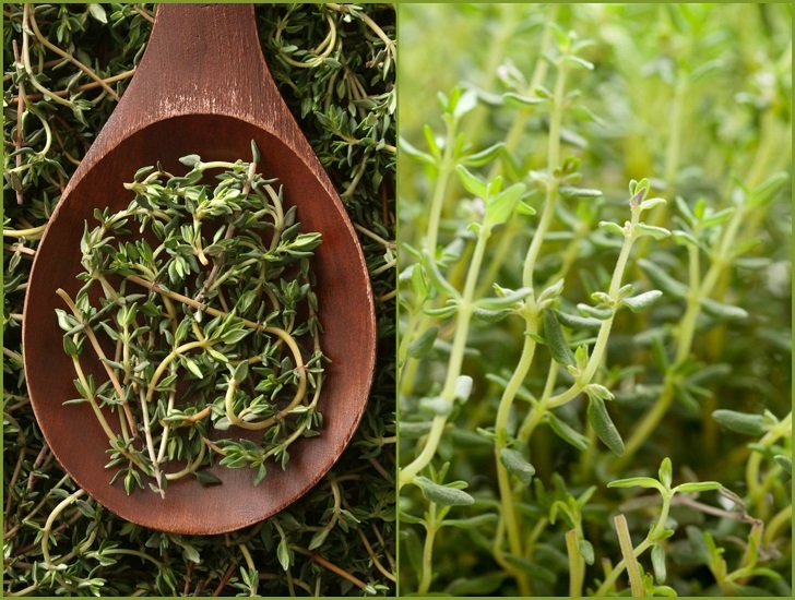 Here's Why You Should Grow Thyme & 18 Ways To Use It