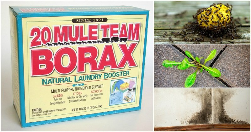 15 Surprising Uses for Borax In The Home & Garden