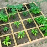 How To Plan A Square Foot Vegetable Garden – The Easiest Way To Grow Abundant Veg