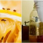 Easy Homemade Trap To Get Rid Of Fruit Flies