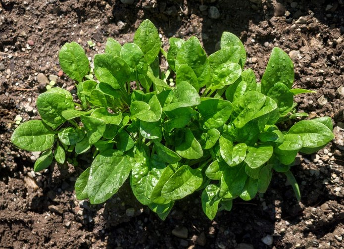 11 No-Work, Fast Growing Greens You Can Grow Anywhere