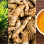 How To Grow Turmeric & 10 Brilliant Ways To Use It