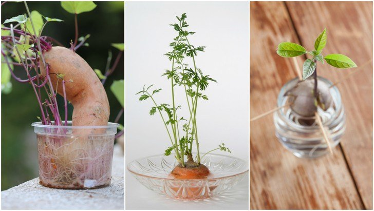 13 Foods You Can Buy Once & Regrow Forever