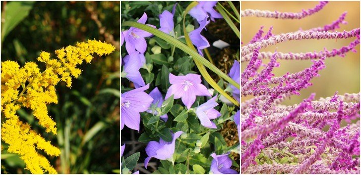 9 Perennials You Should Plant This Fall