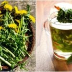 13 Reasons You Should Brew A Cup Of Dandelion Tea