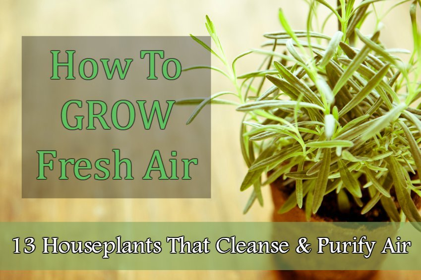 How To Grow Fresh Air 13 Houseplants That Cleanse Purify The