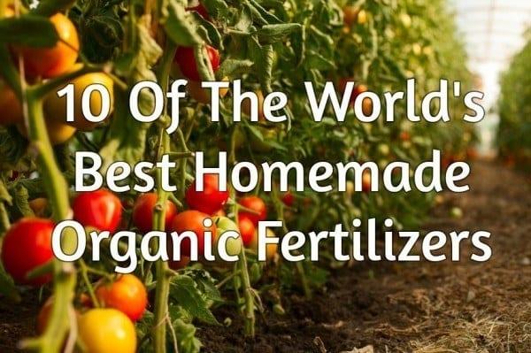 10 Of The World's Best Homemade Organic Fertilizers