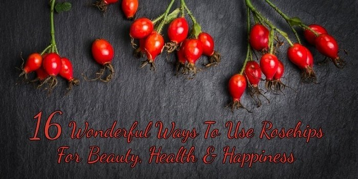 16 Reasons You Should Go Out Foraging For Rosehips Today