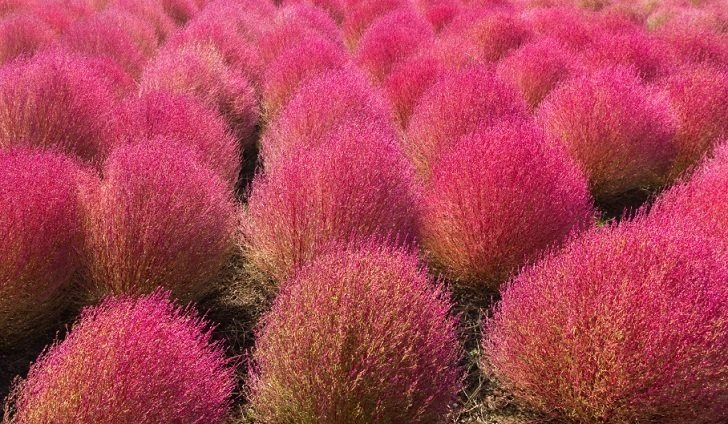 27 Jaw Droppingly Beautiful Plants That Will Get Your