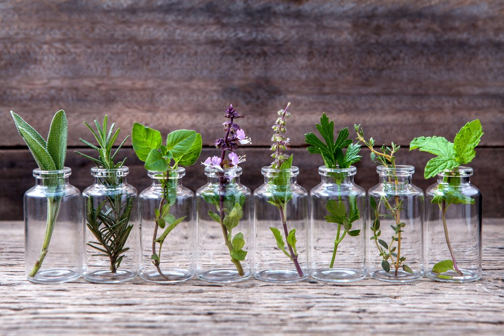25 Herbs, Vegetables & Plants You Can Grow In Water