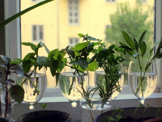 25 Plants & Herbs You Can Propagate from Cuttings