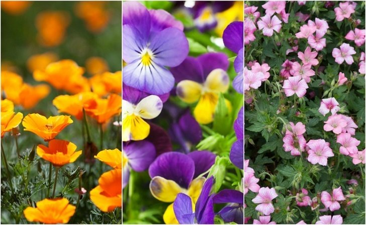 18 Easiest & Most Beautiful Flowers Anyone Can Grow In Their Garden