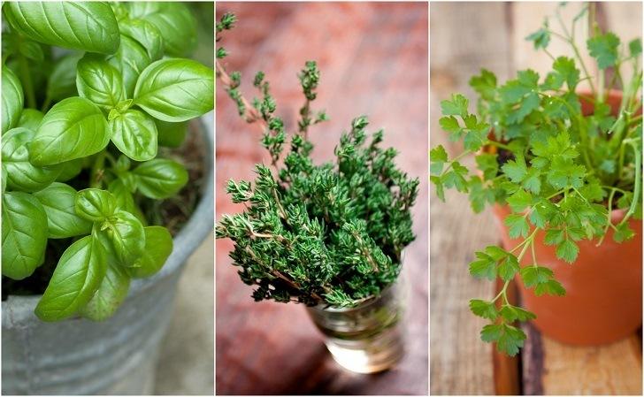 13 Indestructible Indoor Herbs Even You Can Keep Alive