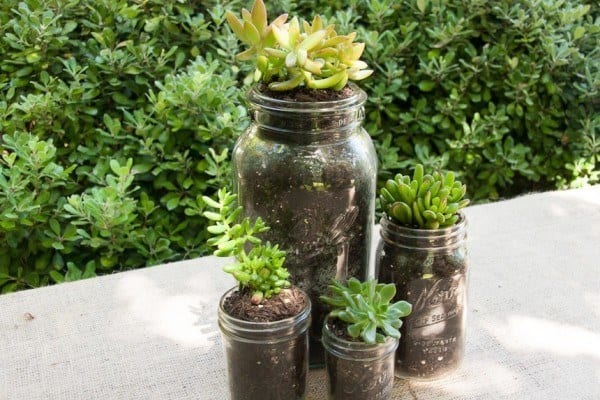 succulent planter in mason jar