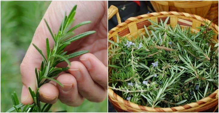 20 Unusual Ways To Use Rosemary That Goes Way Beyond Cooking