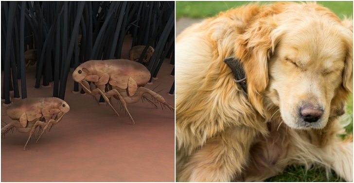 9 Natural Flea Remedies For Dogs That Really Work