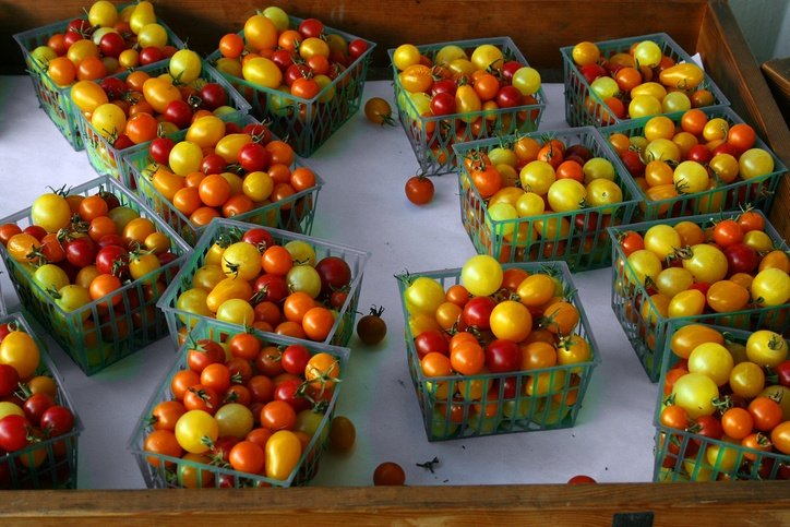 7 Hacks Used By Prize Winning Gardeners To Double Their Tomato Harvest