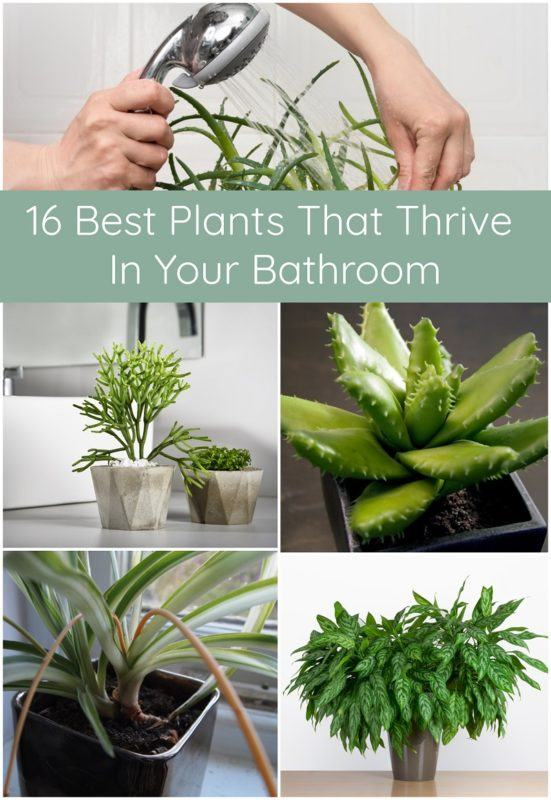 16 Best Plants That Thrive In Your Bathroom