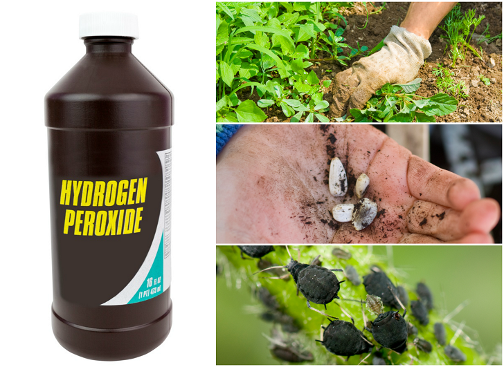 10 Surprising Ways To Use Hydrogen Peroxide In The Garden