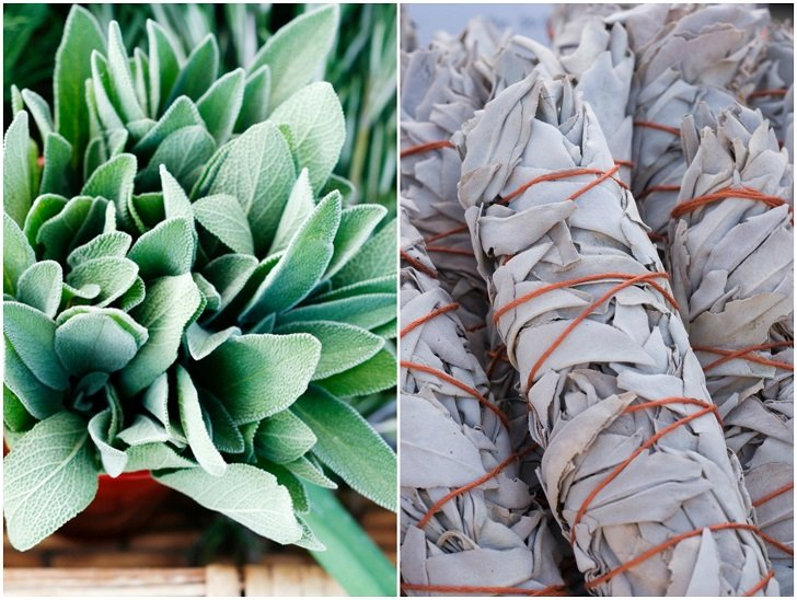 4 Reasons To Grow Sage & 20 Brilliant Ways To Use It