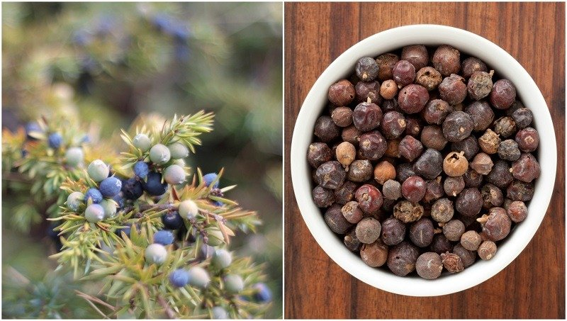 11 Reasons You Should Go Out Foraging For Juniper Berries