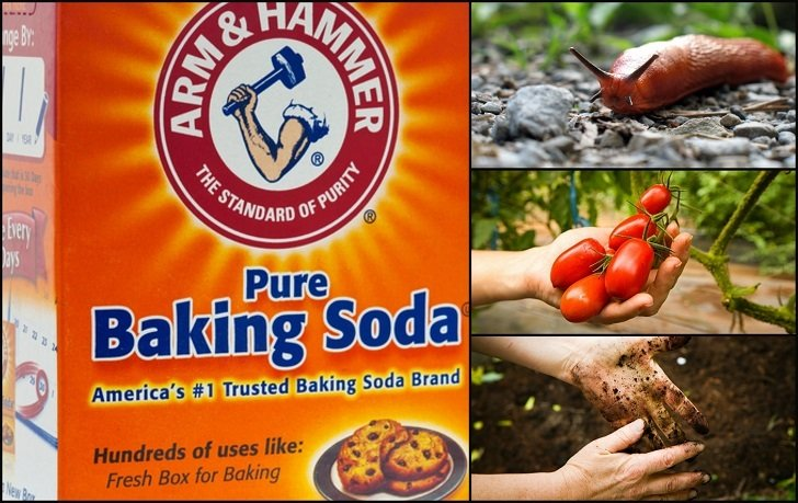 13 Best Uses For Baking Soda In The Garden