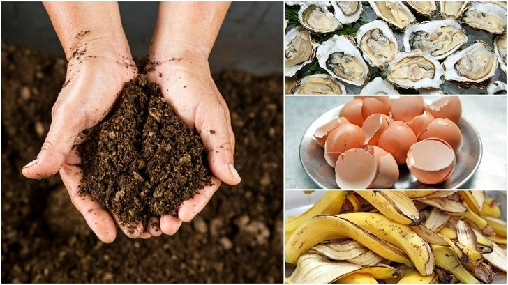 11 Strange Things That Will Improve Your Soil