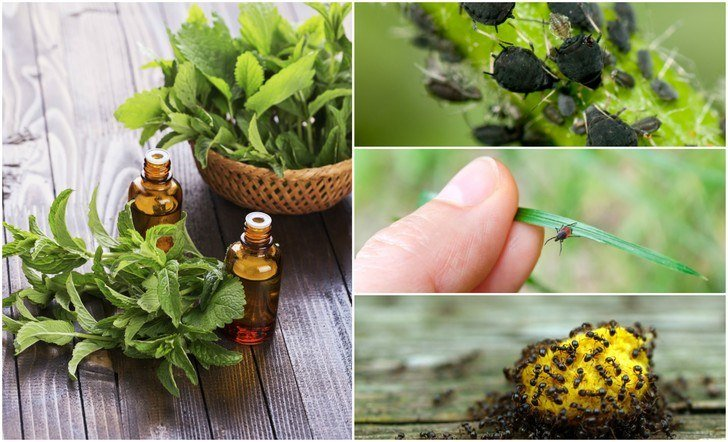 5 Best Essential Oils To Repel Common Bugs and Pests