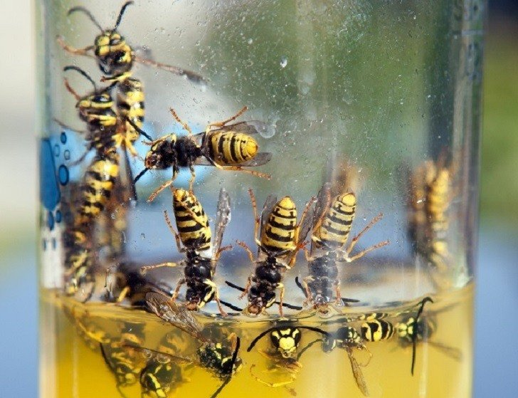 Get Rid Of Wasps & Keep Them Away