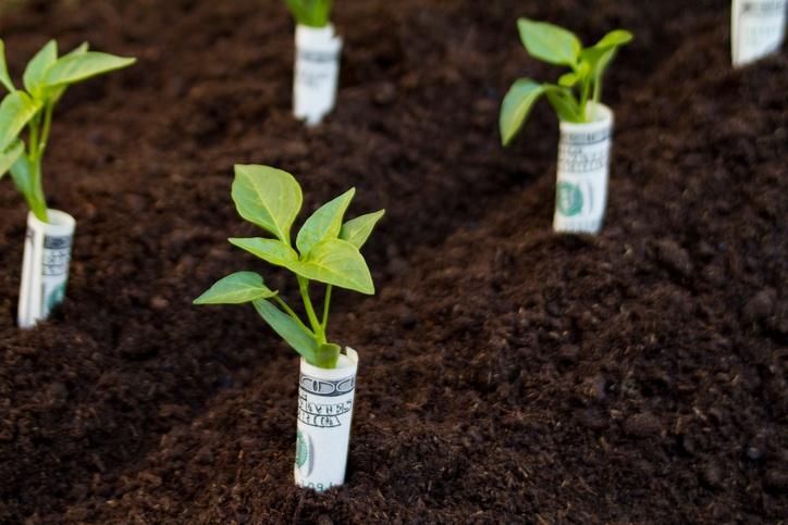 17 Unique Money Saving Tricks Every Gardener Needs To Know