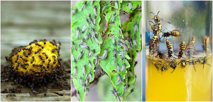 31 Natural Tricks To Repel Pesky Bugs & Insects
