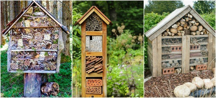 5 Reasons You Should Build a Bug Hotel & How to Do It