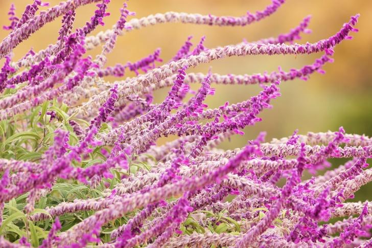 9 Best Fall Perennials