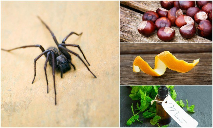 48 Natural Ways To Keep Spiders Out Of Your Home Beauteous How To Get Rid Of Spiders In Bedroom