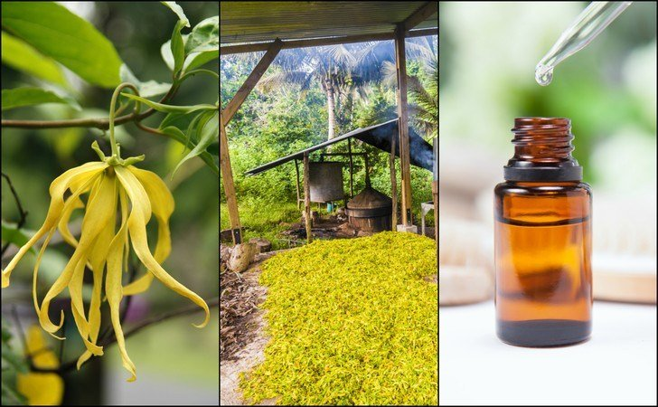 Ylang Ylang Essential Oil: 13 Reasons You Need A Bottle In Your Home