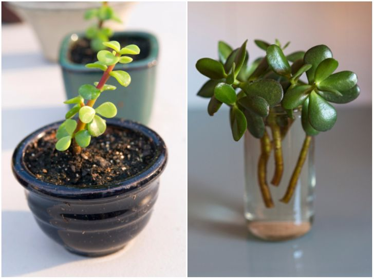 4 Houseplants You Can Easily Propagate From Cuttings