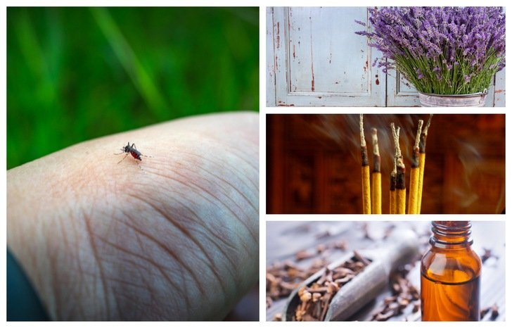 21 Best Ways To Keep Mosquitoes Away From You, Your Home & Garden
